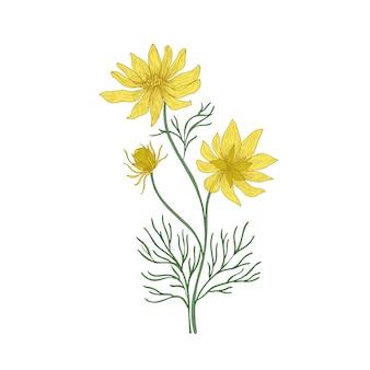 Olho de faisão com flores desenhadas à mão em fundo branco