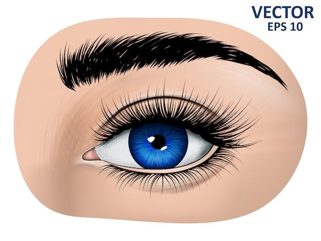 Olhos azuis, sobrancelha e cílios longos