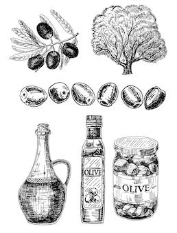 Olive conjunto tinta mão ilustrações desenhadas