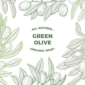 Oliveira. banner da web. ilustração em vetor botânica vintage mão desenhada isolada no fundo branco. estilo de desenho. cartão.