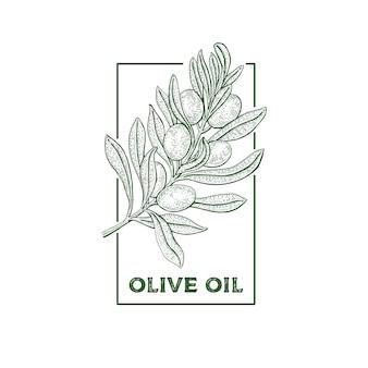 Oliveira. conceito de logotipo vintage. ilustração em vetor botânica mão desenhada isolada no fundo branco. estilo de desenho.