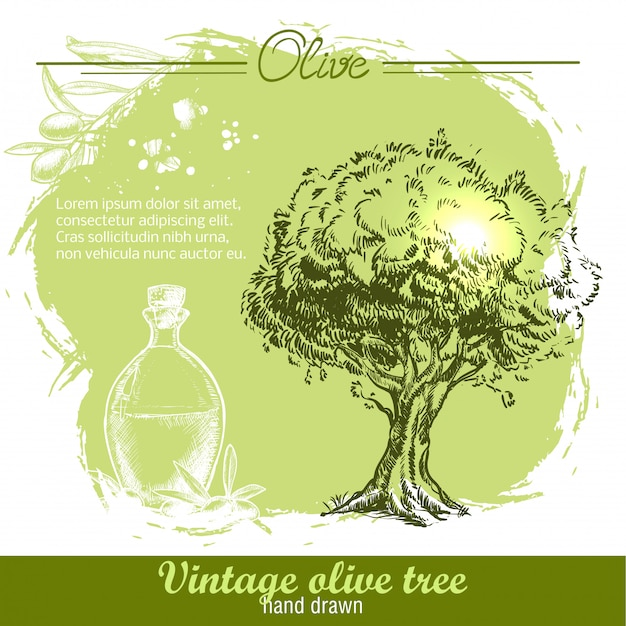 Oliveira desenhada à mão vintage e garrafa de azeite em aquarela