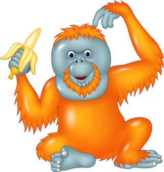 Orangotango dos desenhos animados que come a banana isolada no fundo branco