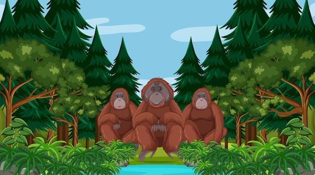 Orangotango em uma floresta ou cenário de floresta tropical com muitas árvores