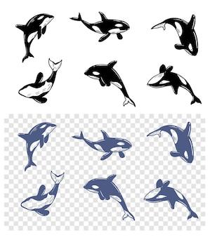 Orca. baleia na água. ilustrações definidas de vetores