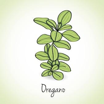 Orégano ervas e especiarias.
