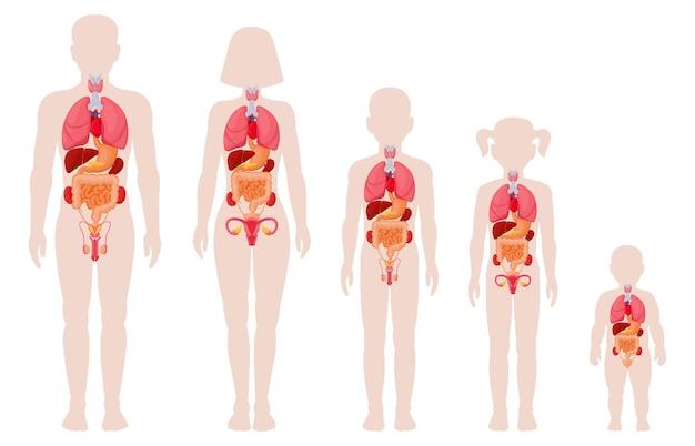 Órgãos da anatomia humana. homem, mulher, menina, menino e bebê recém-nascido com localização de órgãos internos