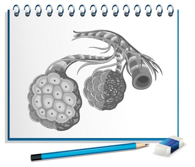 Órgãos humanos com câncer no papel