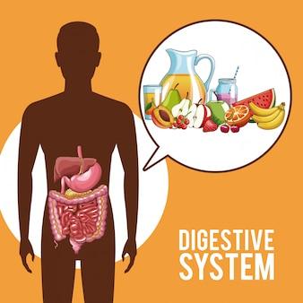 Órgãos humanos do sistema digestivo