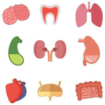 Órgãos internos humanos no fundo branco. ícones do vetor definidos no estilo dos desenhos animados