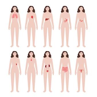 Órgãos internos no corpo da mulher. estômago, coração, rim e outros órgãos na silhueta feminina.
