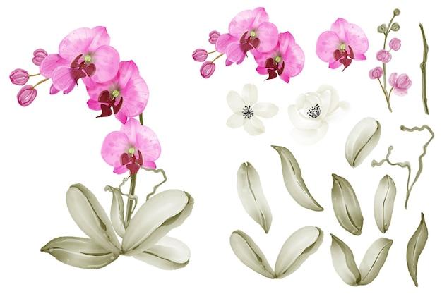 Orquídea rosa aquarela clip-art de elemento isolado
