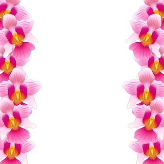 Orquídea rosada vanda miss joaquim