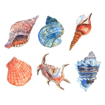 Os ícones decorativos dos cockleshells da estrela do mar do shell da aquarela ajustaram a ilustração isolada do vetor