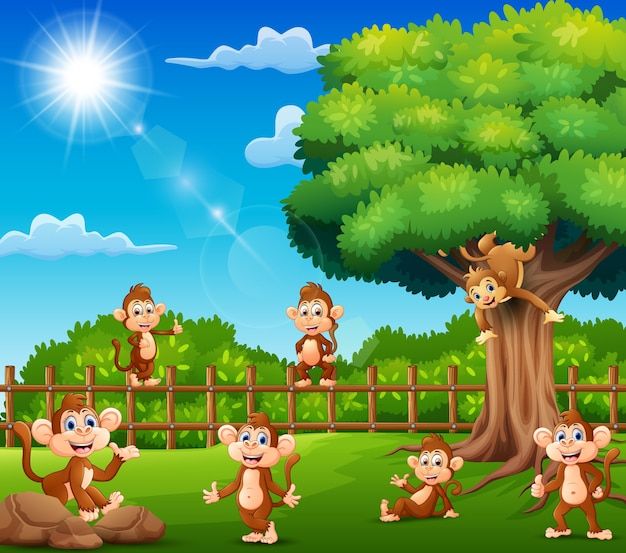 Os macacos estão curtindo a natureza pela gaiola