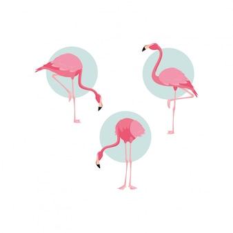 Os pássaros bonitos dos flamingos reunem-se