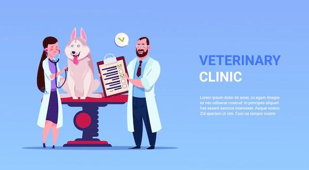 Os veterinários examinam o cão na medicina veterinária da clínica veterinária e o conceito do cuidado