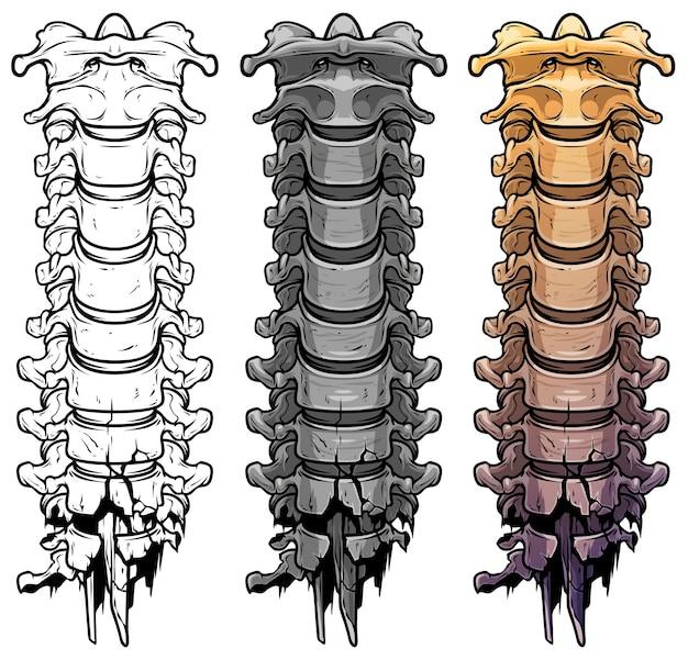 Ossos da coluna esqueleto humano gráfico