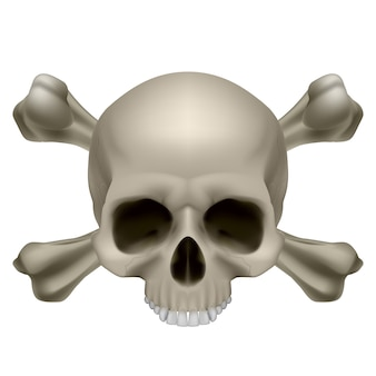 Ossos e crânio humano Vetor Premium