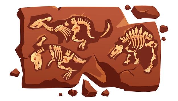 Ossos fósseis de dinossauro, esqueletos de dino em pedra
