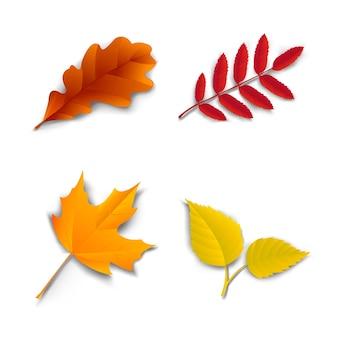 Outono carvalho maple ash folhas de vidoeiro