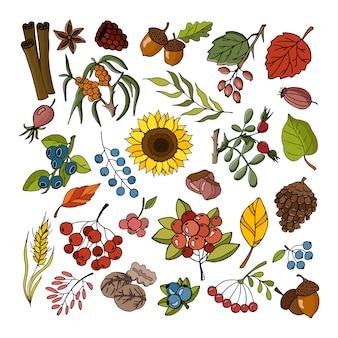 Outono coleção de plantas e flores