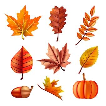 Outono conjunto com folhas, carvalho e abóbora