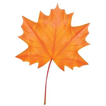 Outono ilustração vetorial