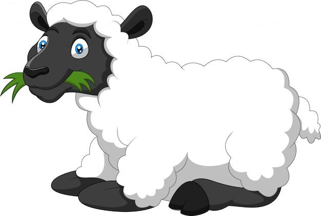 Ovelha engraçado dos desenhos animados, comendo uma grama