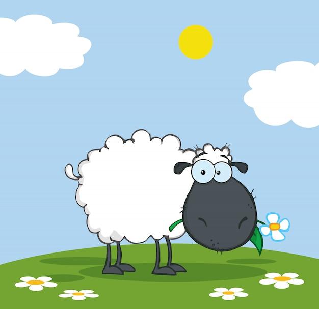 Ovelha negra comendo uma flor em um prado