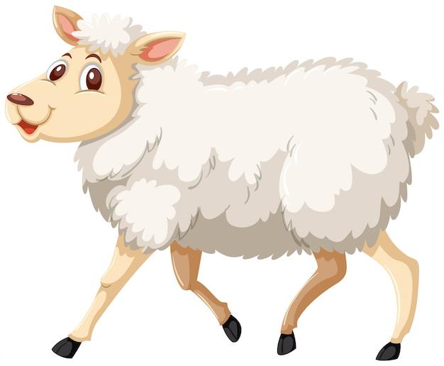 Ovelhas brancas andando