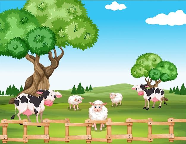 Ovelhas e vacas no campo