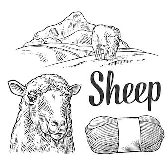 Ovelhas no pasto e fios. ilustração de gravura vintage