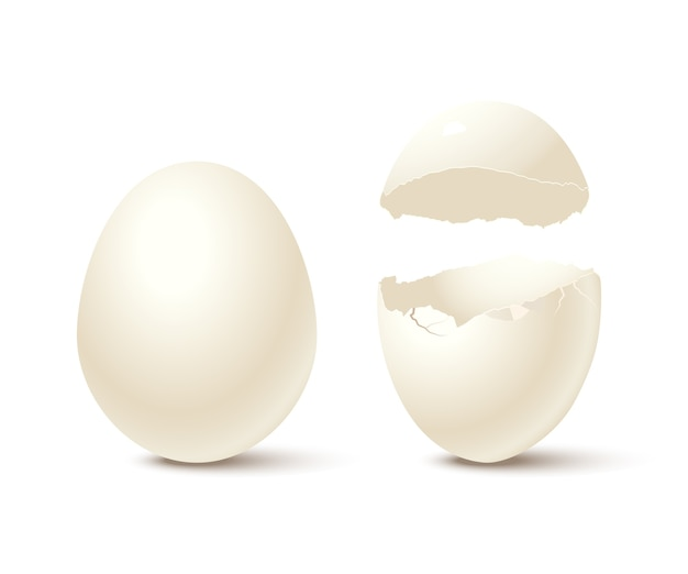 Ovo e casca de ovo vazia quebrada, isolados no fundo branco.