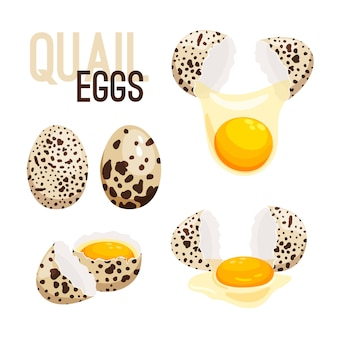 Ovos de codorna, ilustração inteira e quebrada