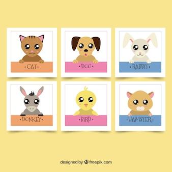Pacote de adoráveis cartões de animais