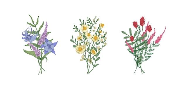 Pacote de buquês de lindas flores do prado e plantas herbáceas