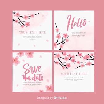 Pacote de cartão de flor de cerejeira