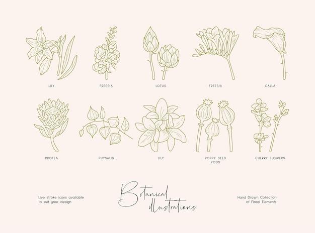 Pacote de desenhos botânicos detalhados de coleção de flores silvestres desabrochando de plantas desenhadas à mão