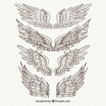Pacote de elegantes asas desenhadas à mão