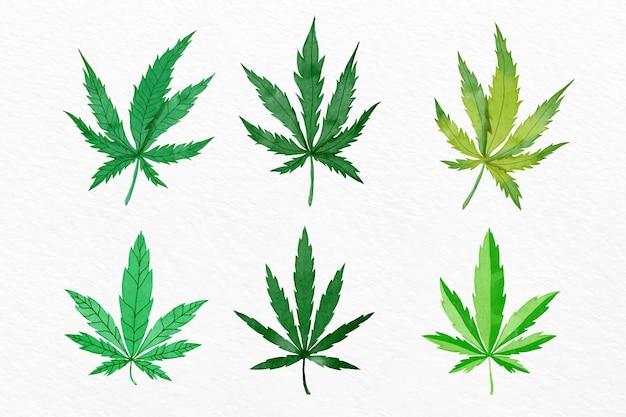 Pacote de folhas de cannabis em aquarela