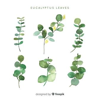 Pacote de folhas de eucalipto em aquarela
