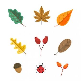 Pacote de folhas de outono e flor