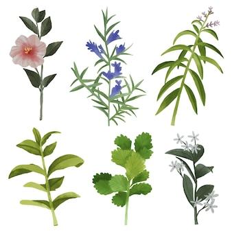 Pacote de folhas e flores