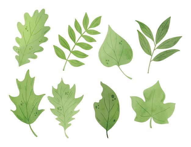 Pacote de folhas verdes em aquarela