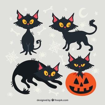 Pacote de gato preto e abóbora