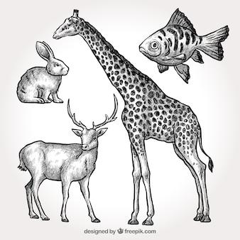 Pacote de girafa desenhada a mão com outros animais