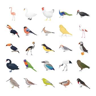 Pacote de ícones de vetor plana de pássaros
