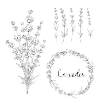 Pacote de ilustração botânica.