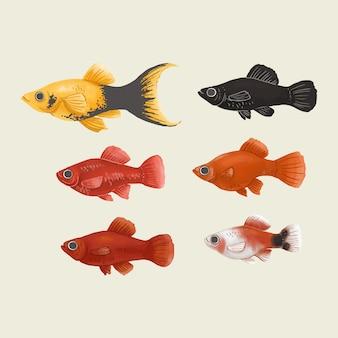 Pacote de ilustração platy fish